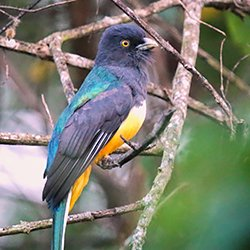 Wild Latitudes Birding and Nature Tours