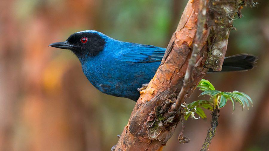 3 Reasons You Should Start Birdwatching