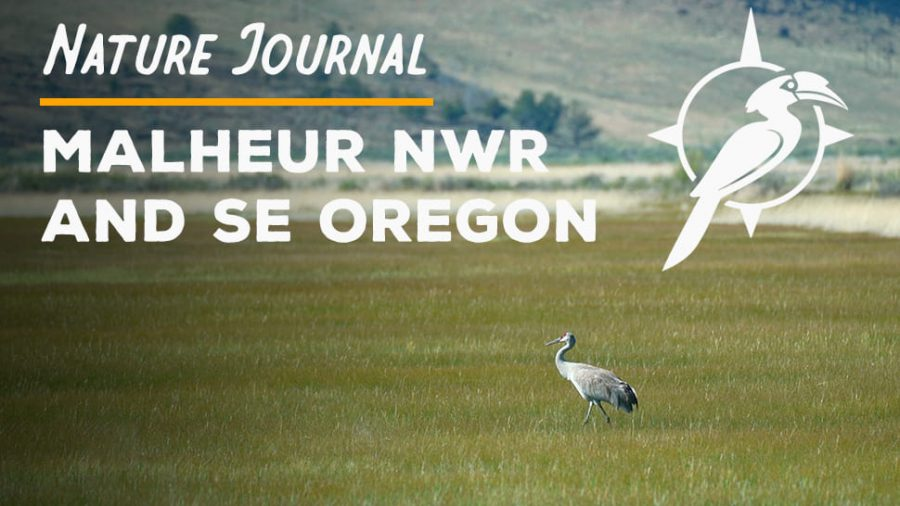 Nature Journal: Malheur Refuge in Oregon [Video]